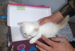томский котенок
