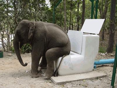 слон и унитаз