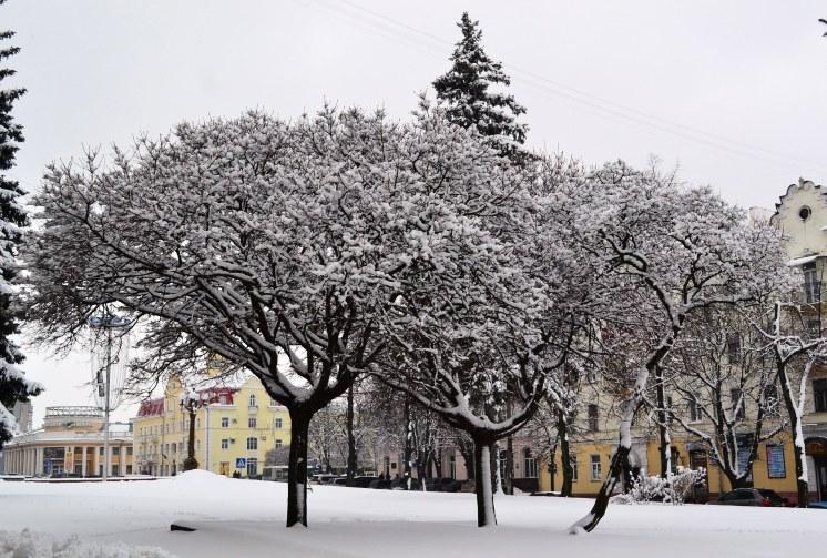 Снегопад_1326