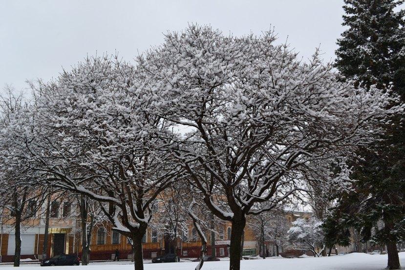 Снегопад_1328