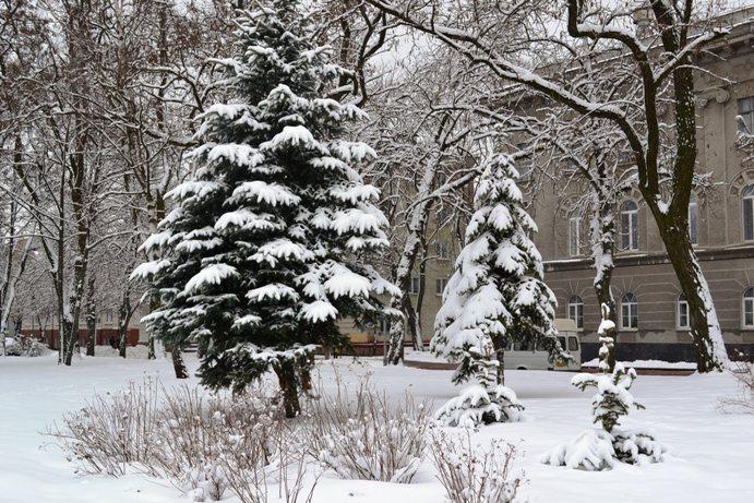 Снегопад_1332