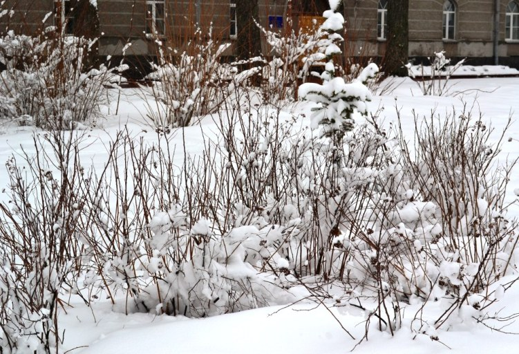 Снегопад_1334