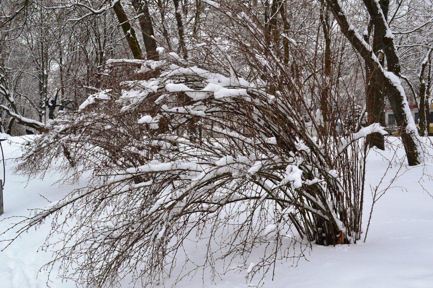 Снегопад_1335