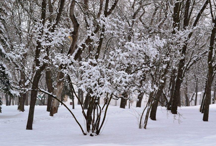 Снегопад_1341