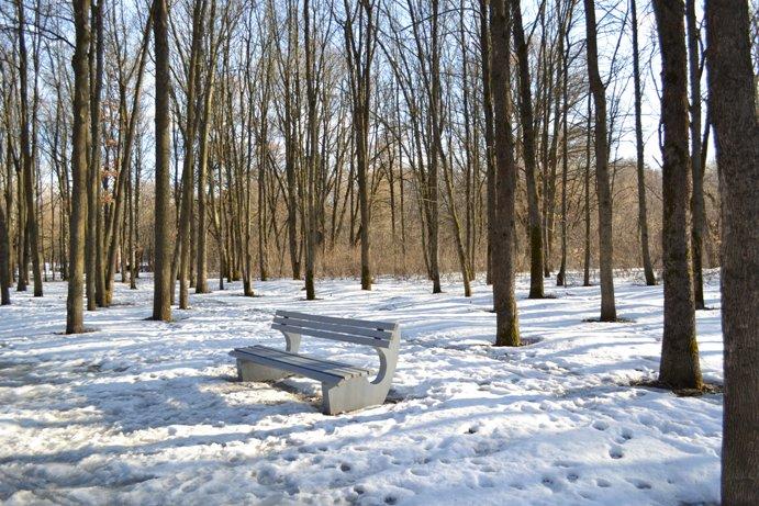 Парк - скамейка_1333