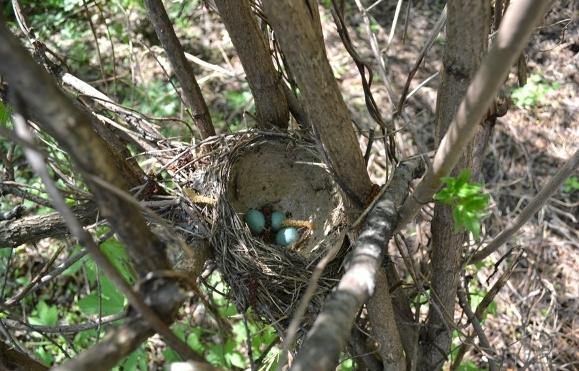 гнездо-жж