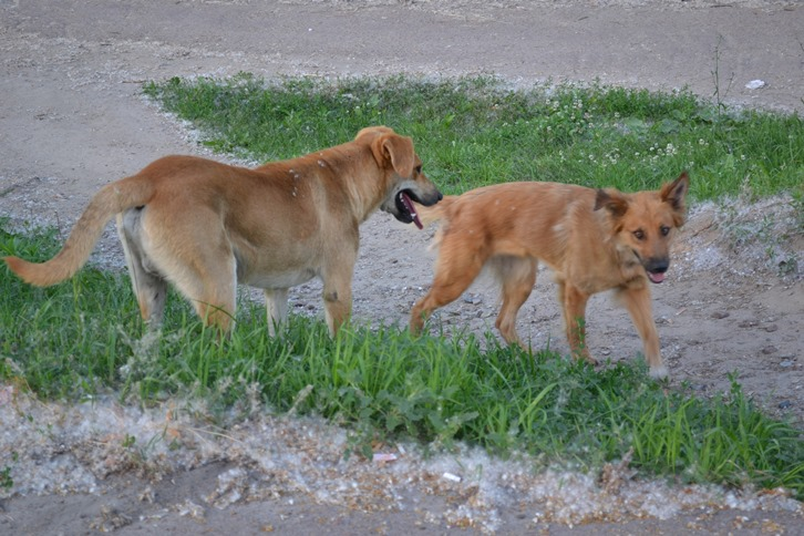 Собаки-жж-_0268