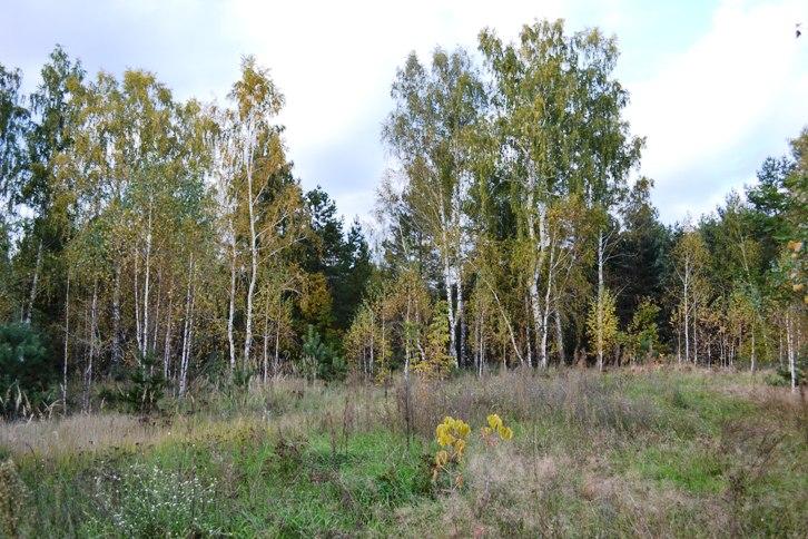 осен лес_0641
