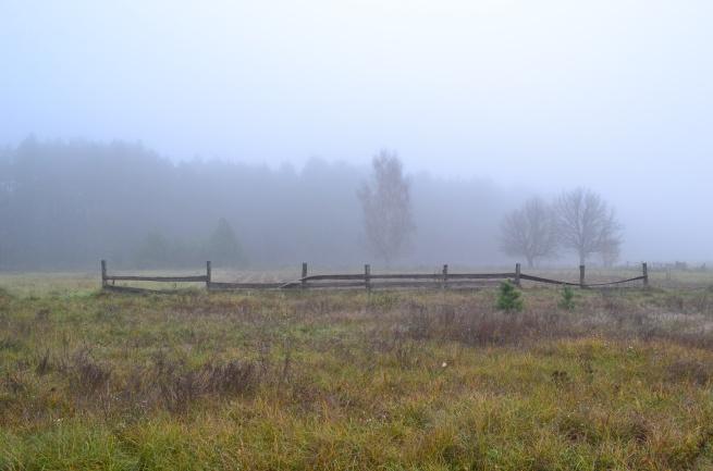утро туманное_0771