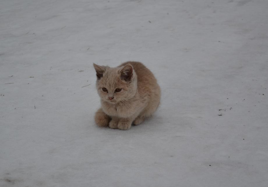 котёнок-жж