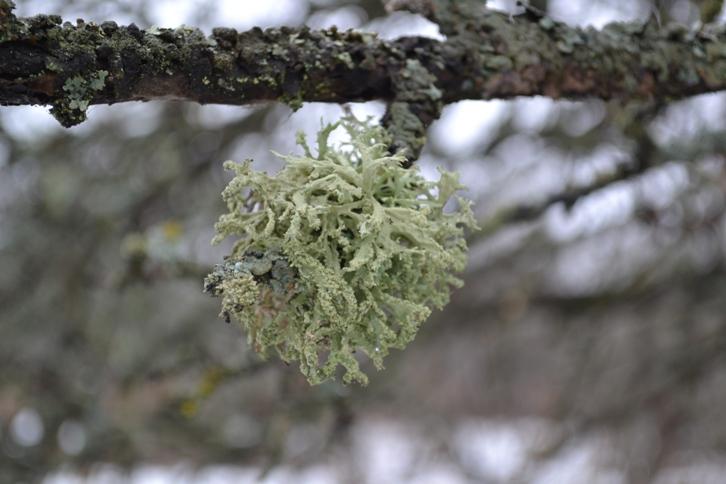 ветка дерева_0342