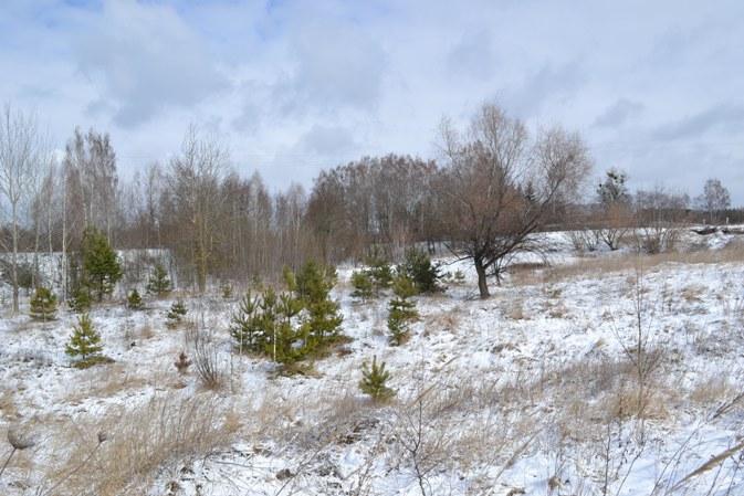 снег_0489