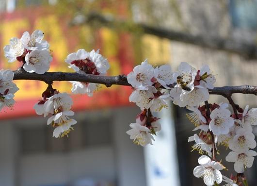 пчела и цвет_0545