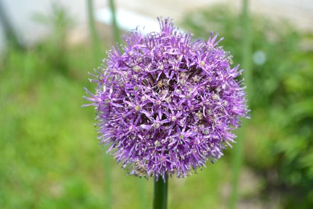 растение_0903