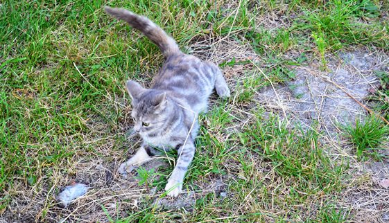 кошка-мышка_0403