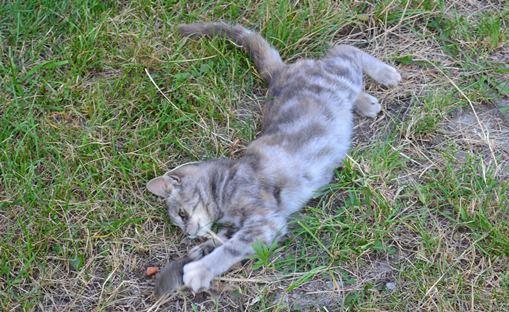 кошка-мышка_0405