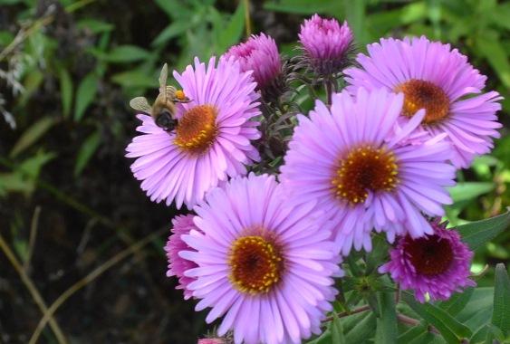 пчела_0911
