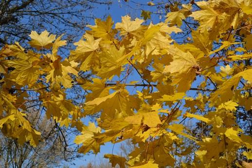 листья_0983