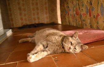 кошка_0058