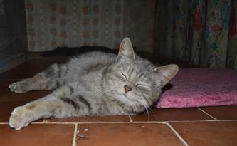 кошка_0051