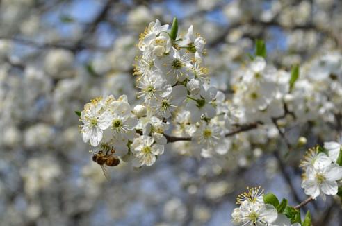 пчёлка_0188