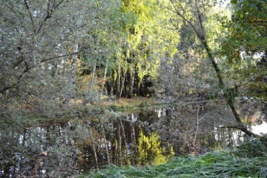 лес_0792