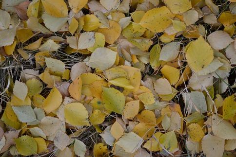 листья_0880