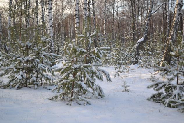 лес_0176
