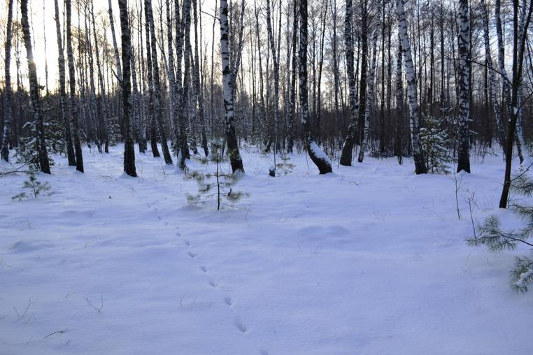 лес_0166