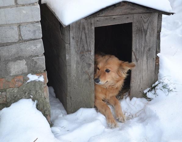 собака_0123