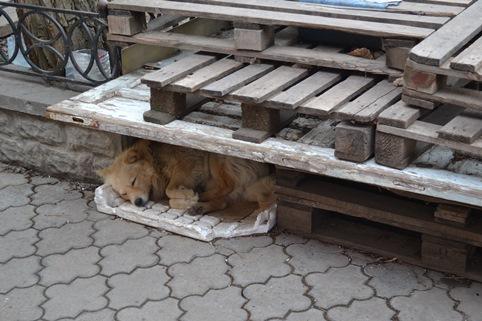 собака_0556