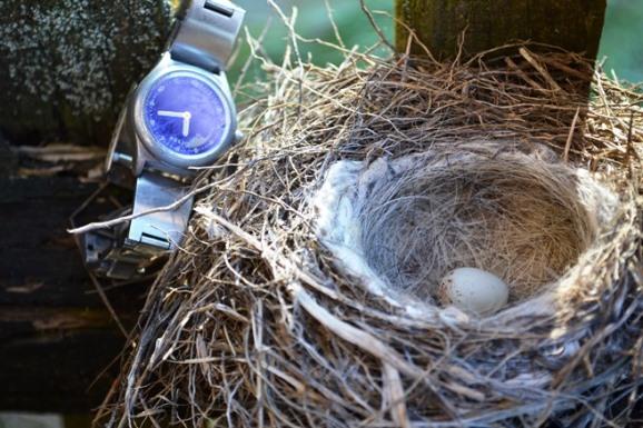 гнездо-1_0643