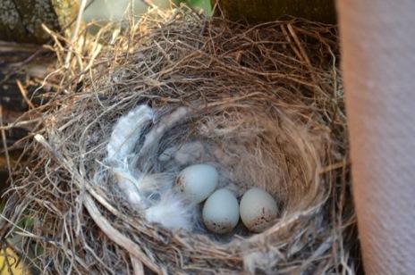 три яйца_0655