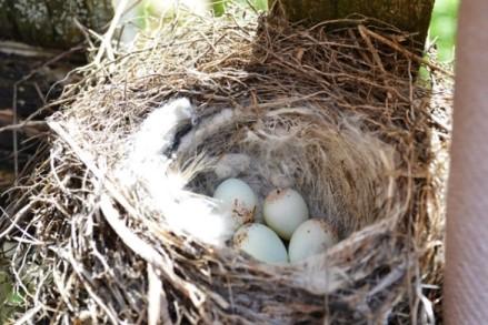 четыре яйца_0661