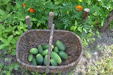 праздник первого урожая_0330