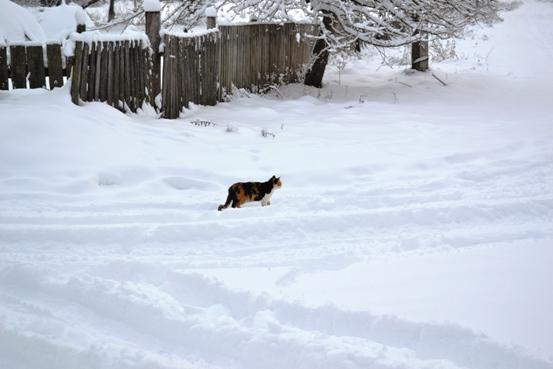кошкин путь_0355