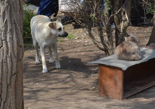 пес и кот_0055
