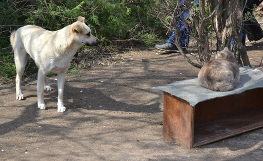 пес и кот_0057