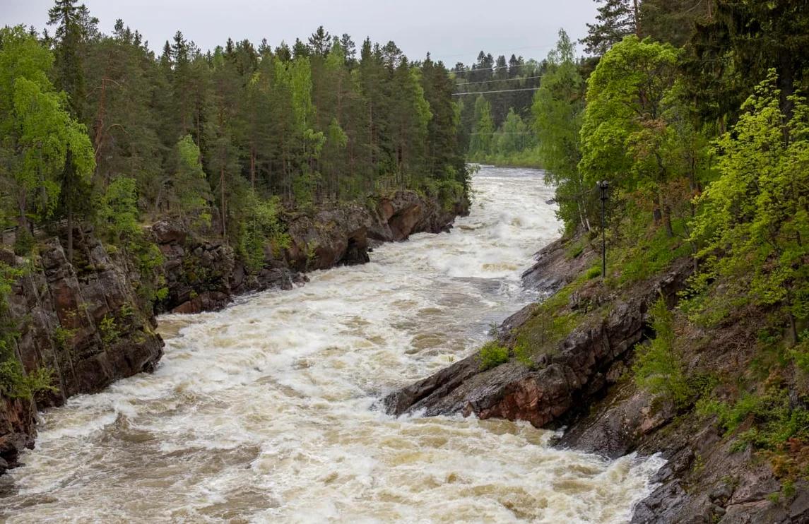 Фото: Kalle Purhonen / Yle