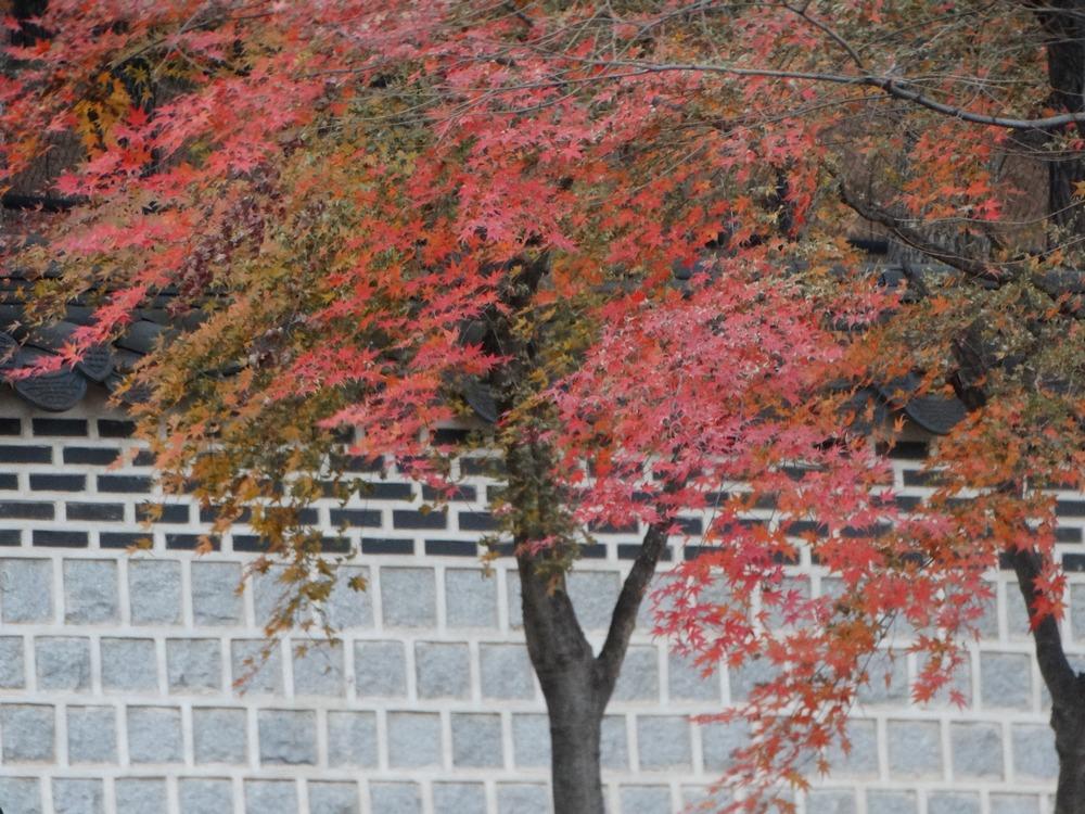 Korea (44).jpg