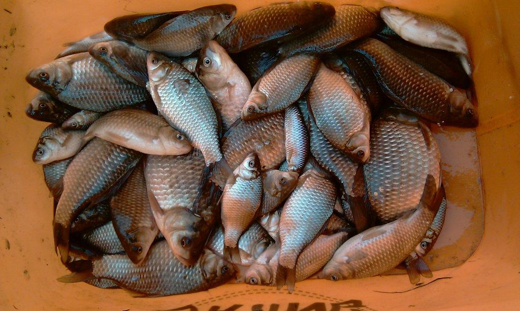 рыбалка во  кучугурах