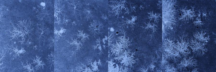 Ледяные фракталы на асфальте