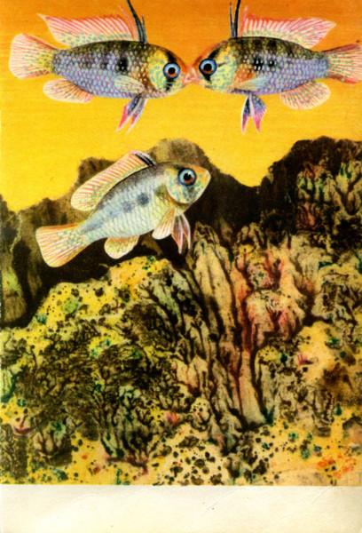 Зденек Фогель. Аквариумные рыбки (продолжение)