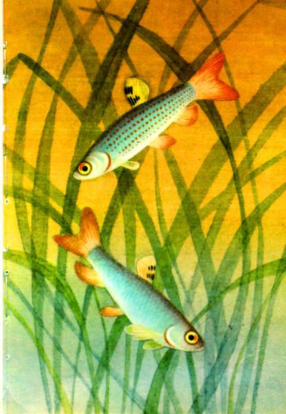 Зденек Фогель. Аквариумные рыбки (часть 5)