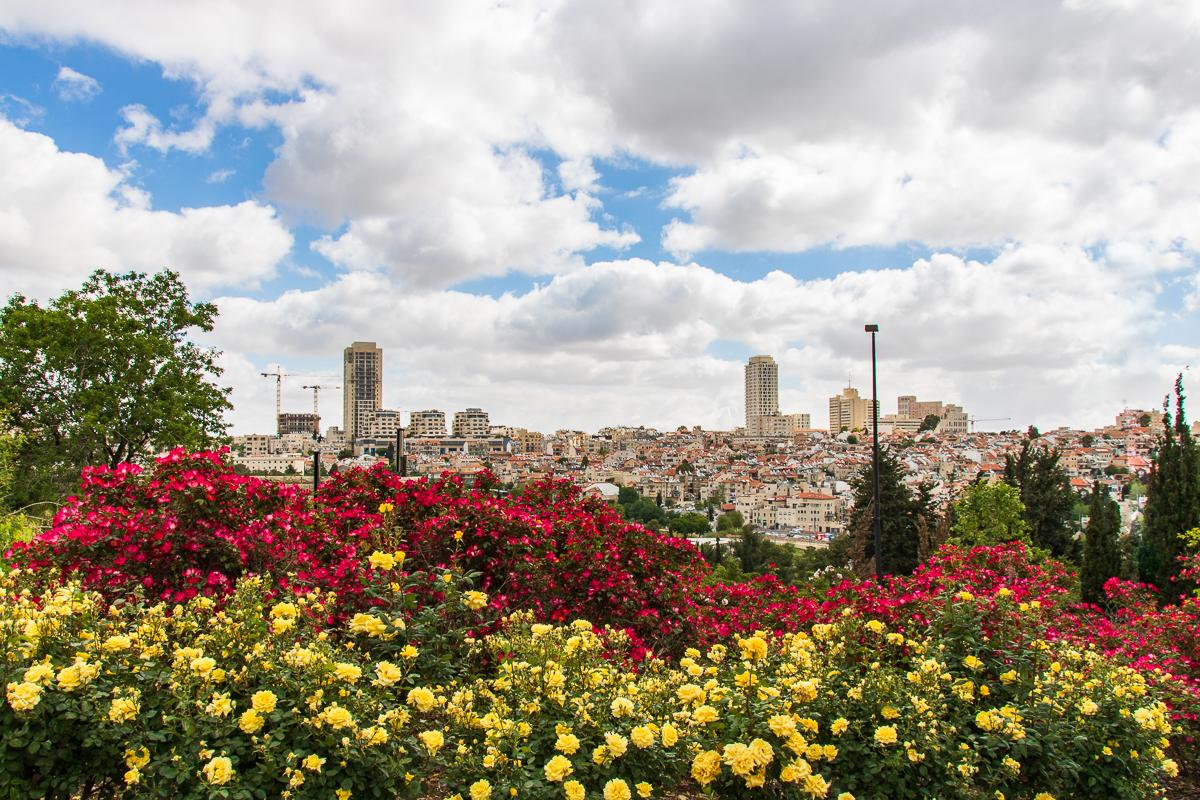Jerusalem_rozy_017.jpg