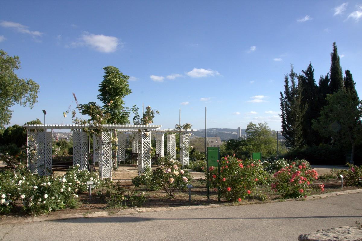 Jerusalem_rozy_068.jpg