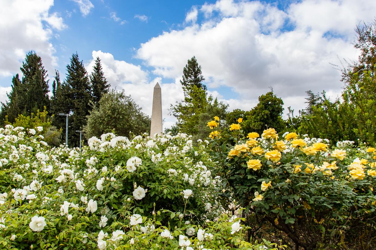 Jerusalem_rozy_071.jpg