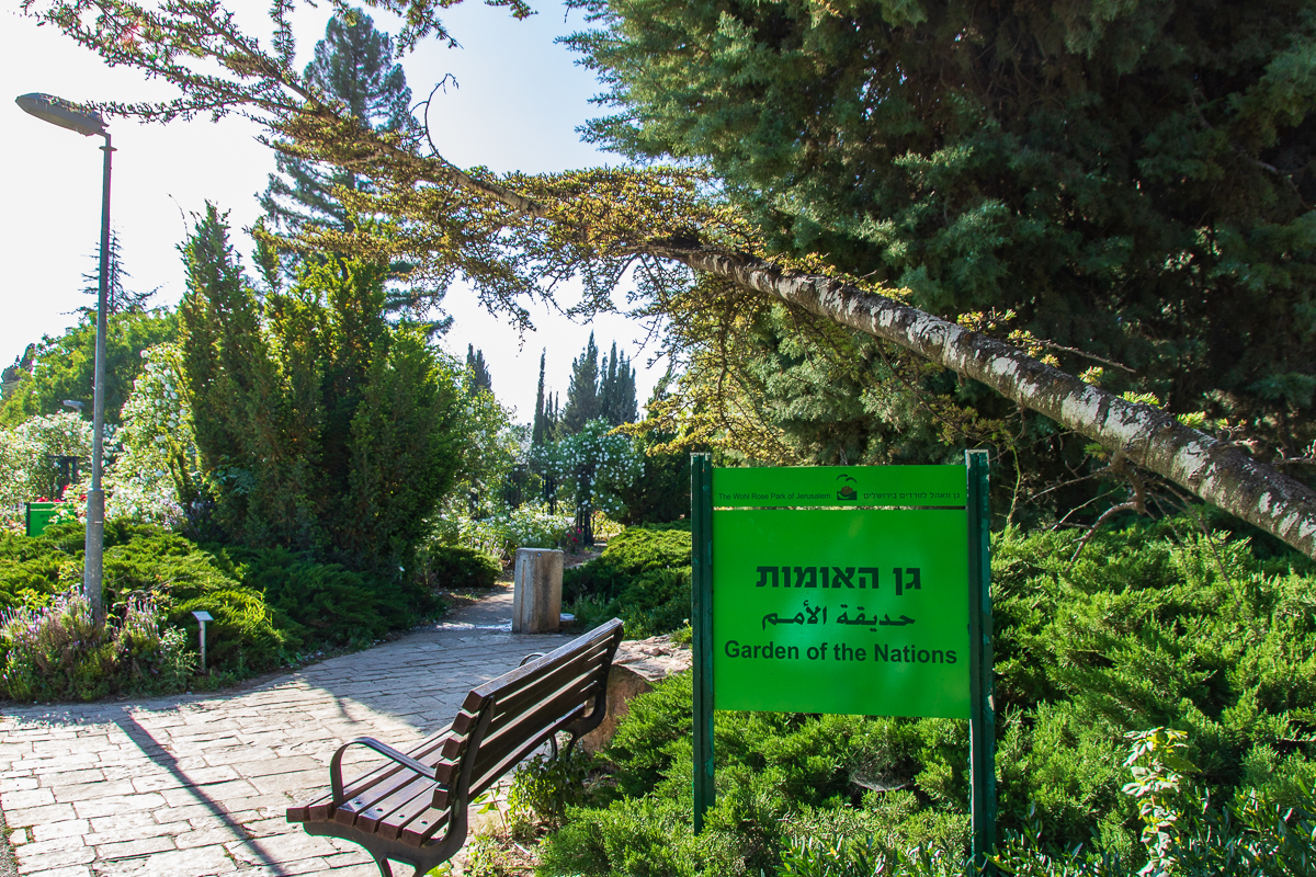 Jerusalem_rozy_089.jpg