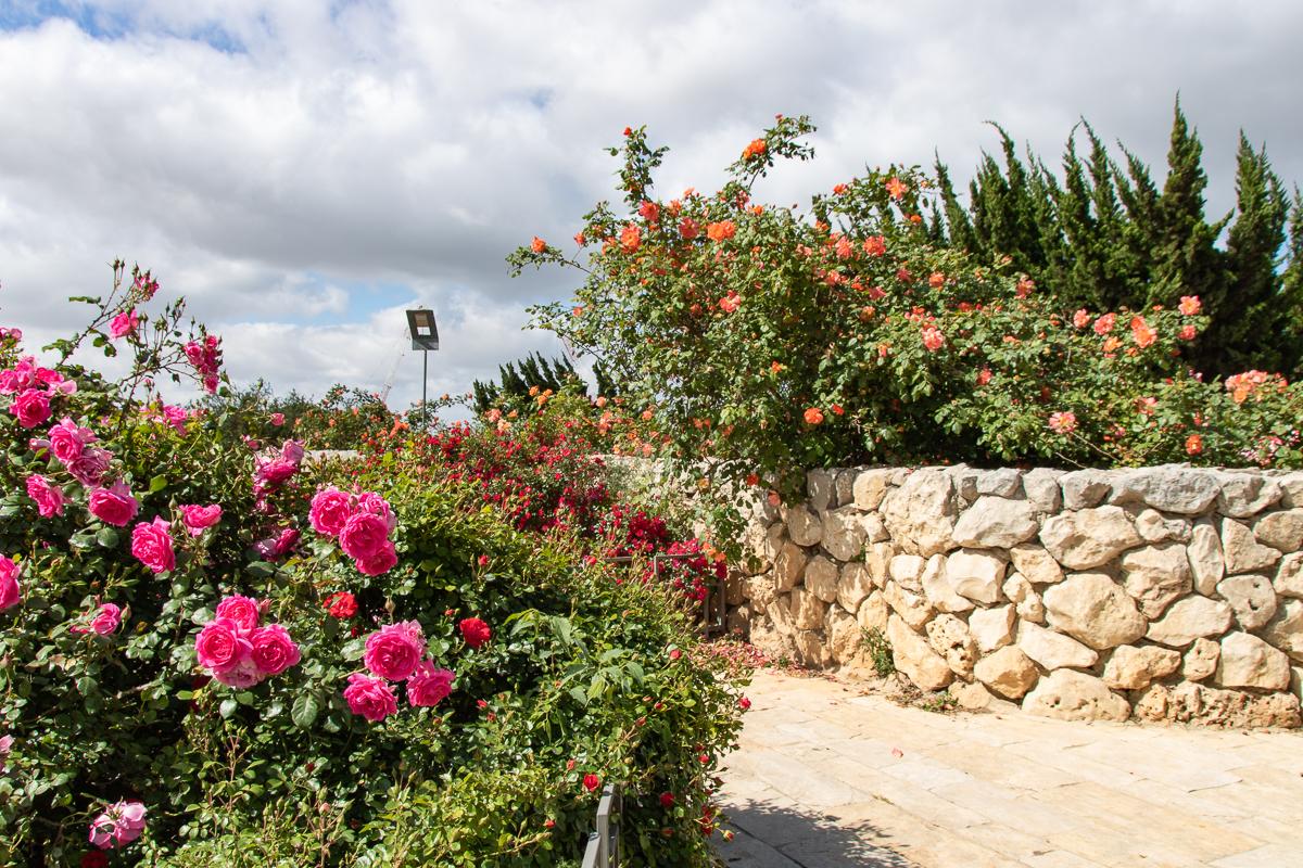 Jerusalem_rozy_090.jpg