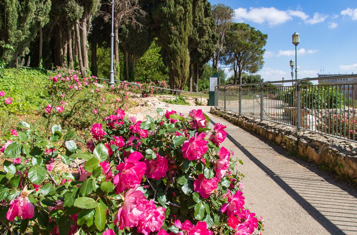 Jerusalem_rozy_094.jpg